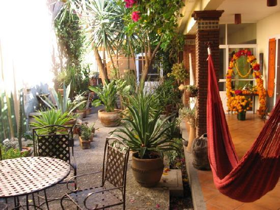 Bed &amp; Breakfast at the Oaxaca Learning Center: Courtyard