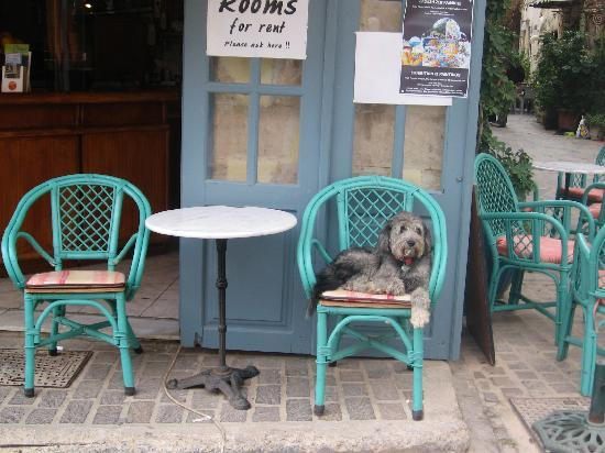 Pension Nora: cafe where you check in, owners dog