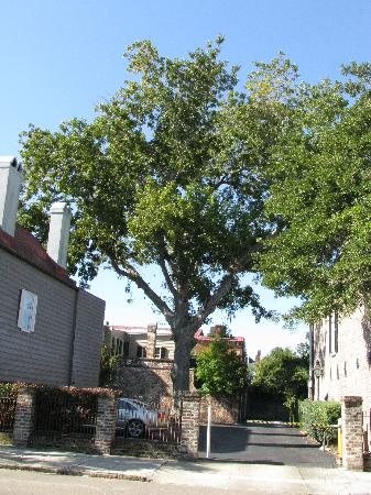 A Bed and Breakfast at 4 Unity Alley: Next to worlds tallest pecan tree