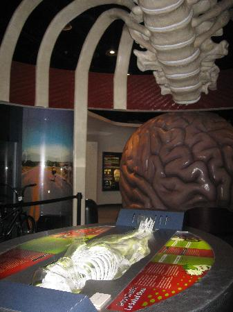You: The Exhibit - Picture of The Health Museum, Houston ...
