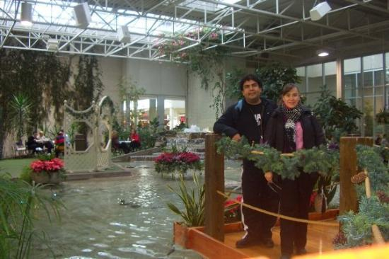 Koi pond picture of devonian gardens calgary tripadvisor for Koi 8th ave