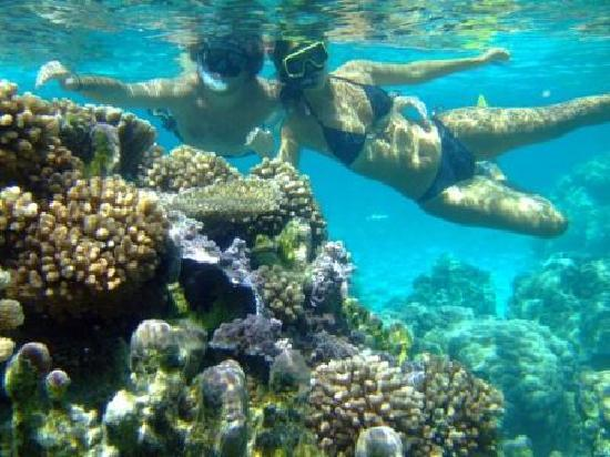The Coral Garden Picture Of Pure Snorkeling By Reef