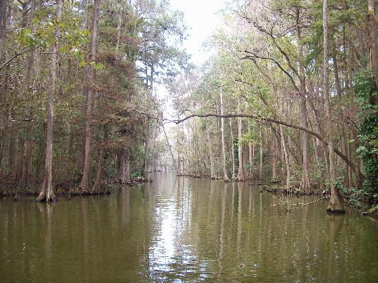 Mount Dora, FL: the Dora canal