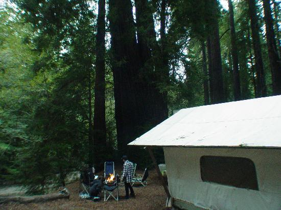 Our Tent Cabin Picture Of Fernwood Resort Big Sur