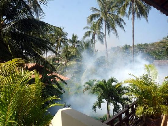 Sunshine Beach: the fumigation was like napalm