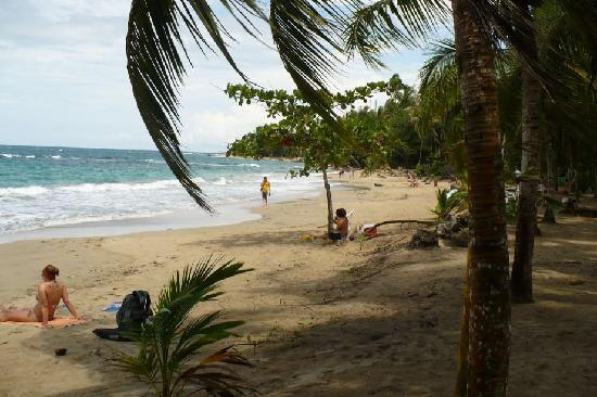Cocles, Costa Rica: beach nearby