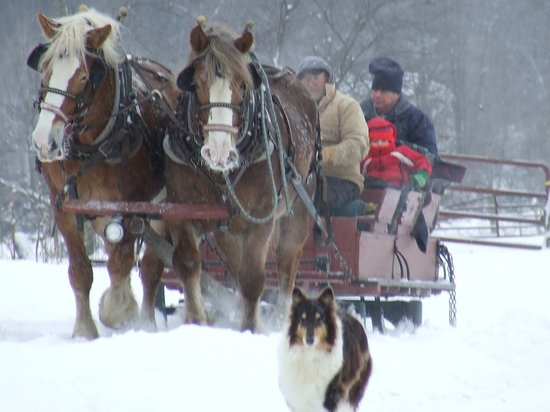Harrison, ME: Sleigh ride coming back to the barn.