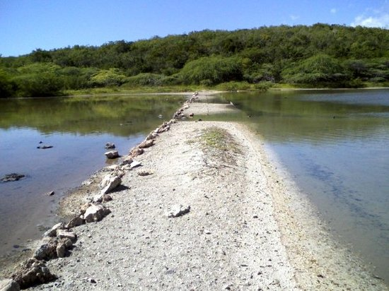 """SALT FLATS"" at Playa Jungla, just East of Guanica, Puerto Rico...  12/29/2007"
