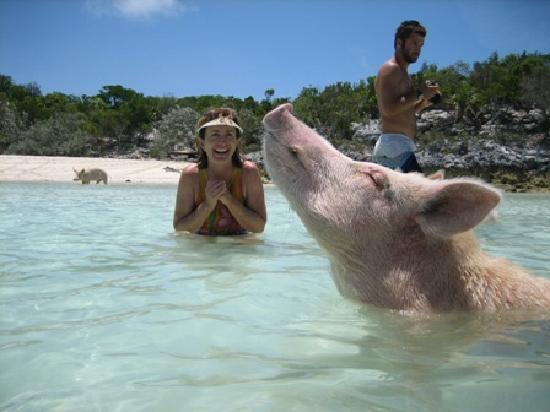 Great Exuma: Swimming with Pigs at Staniel Cay