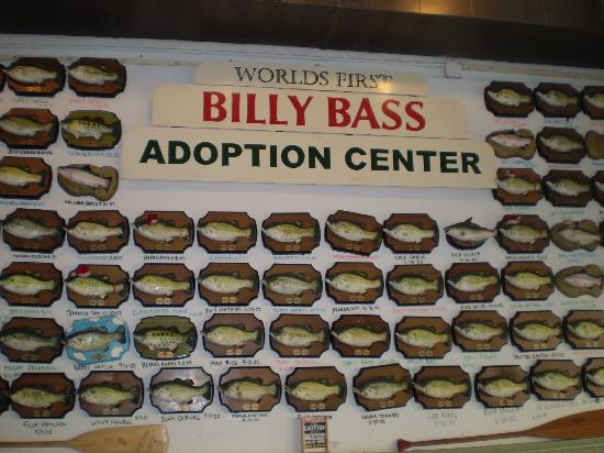 Flying fish billy bass wall picture of flying fish of for Flying fish little rock