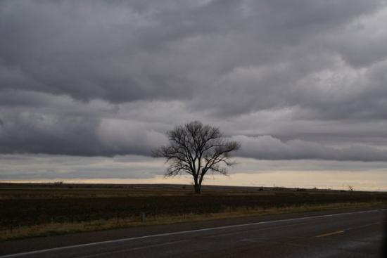 Lamar, CO: Storm clouds and a lonely looking tree