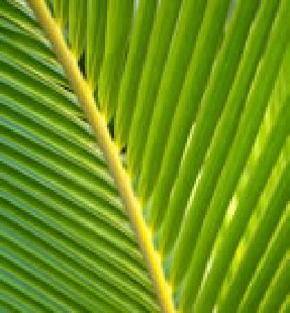 The Palms: LEAF