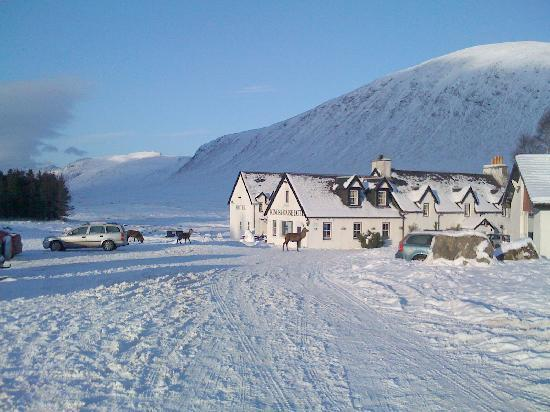 Kings House Hotel Glencoe