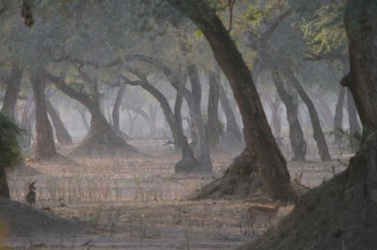 Mana Pools National Park attractions