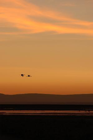 Hotel Alto Atacama: Sunset at the salar
