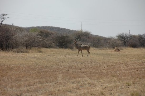 Otjiwarongo attractions