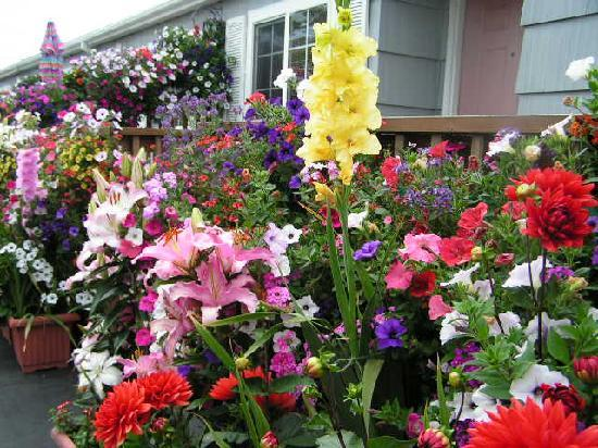 ‪‪Seaside‬, ‪Oregon‬: Award Winning Flowers‬