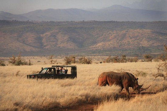 Photos of Lewa Safari Camp, Laikipia