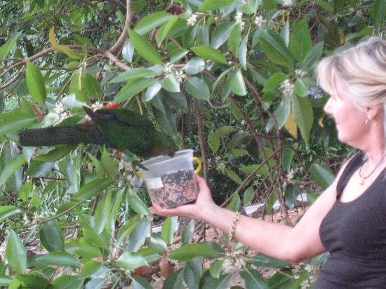 Sunway Farm Bed and Breakfast: bird feeding with Janette