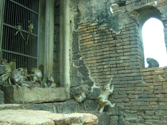monkey temple - Picture of Phra Prang Sam Yot, Lop Buri ...