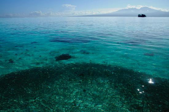 Fatboys picture of ghizo island solomon islands for Solomons island fishing report