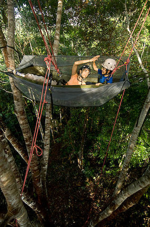 Tropical Tree Climbing