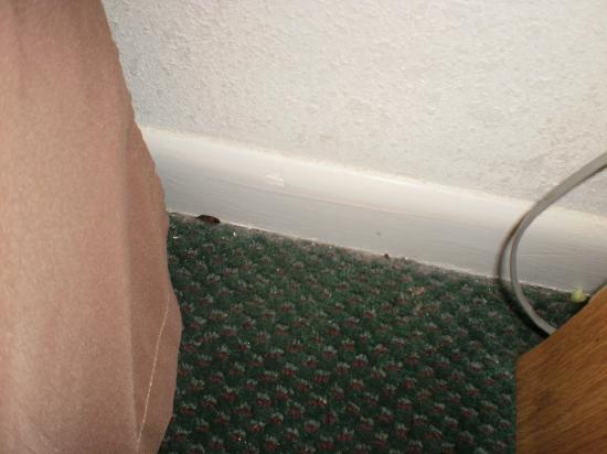 Quality Inn Williams Bed Bugs