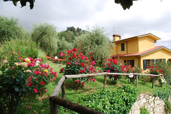 Villa Oliveto Bed & Breakfast