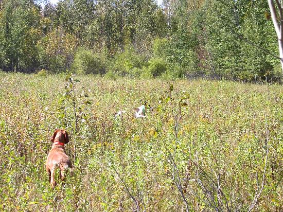 Pheasant hunting at the Hunt Club - Picture of Border View ...