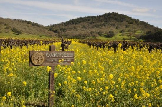Oakville Winery Ca United States Picture Of Oakville Napa Valley Tripadvisor