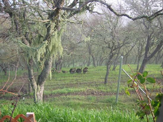 High Ridge Manor: Wild Turkeys on the Mountainside