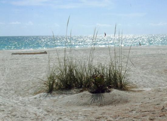Holmes Beach, FL: One of my all time favorite places . I'm not telling where it is. Its Shanda's secret secluded b