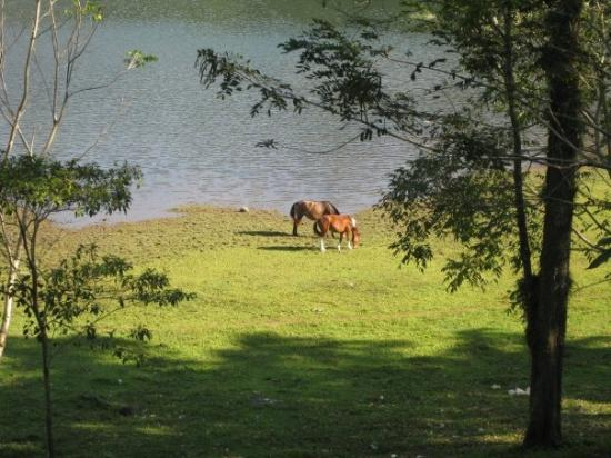 Tegucigalpa, Honduras: Wild horses?