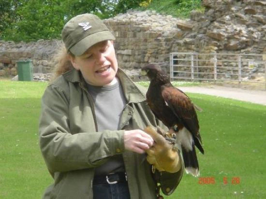 Falcons at Pontefract Castle.