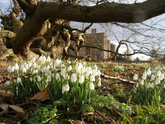 ลิงคอล์น, UK: Snowdrops at Doddington