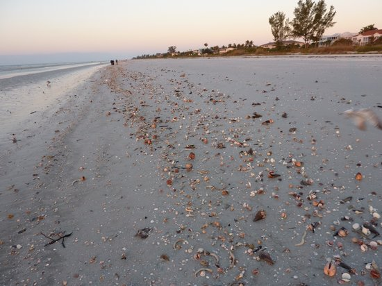 Île de Sanibel, Floride : lots of shells at dawn 2-28-2010