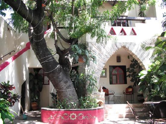 Hotel Casa Blanca: I absolutely love this tree!