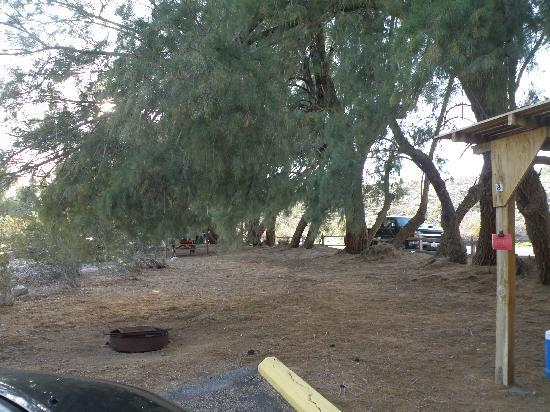 Campsite Area Of Campsite 8 At Tamarisk Grove