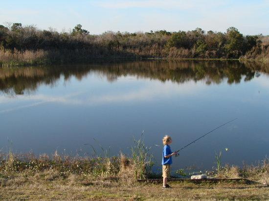 Lakeland, FL: Picnic fishing area