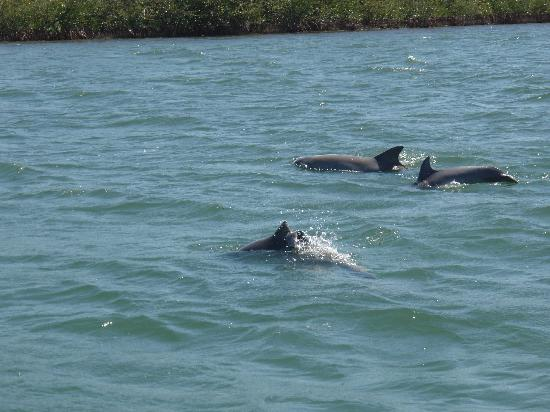Stuart, FL: Dolphins