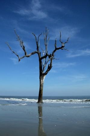 Beaufort, SC: The Lone Tree 4 - This lone tree poses against the tides of time. The beach is slowly eroded and