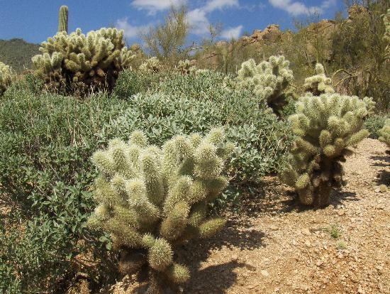 Desert Plants Arizona http://www.tripadvisor.com/ReviewPhotos-g31350-d74197-r58246523-Sonoran_Suites_of_Scottsdale-Scottsdale_Arizona.html