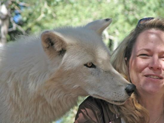 Divide, โคโลราโด: At the Colorado Wolf and Wildlife Center