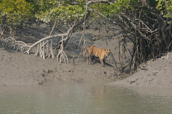 Photos of Sundarbans National Park, West Bengal