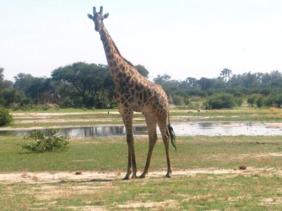 Central Kalahari Game Reserve attractions