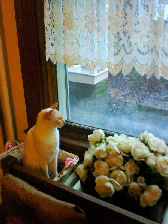 Etta Mae Inn Bed and Breakfast: One of her cats by the window