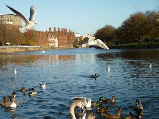 10 Best Bedford Estates On Tripadvisor Compare Houses Flats In Bedford England