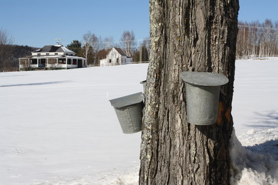 Maple syrup season in Sugar Hill, New Hampshire