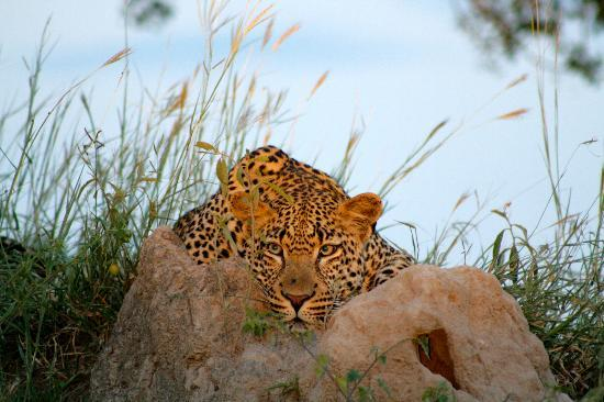 Singita Boulders Lodge: we were amazed to see this