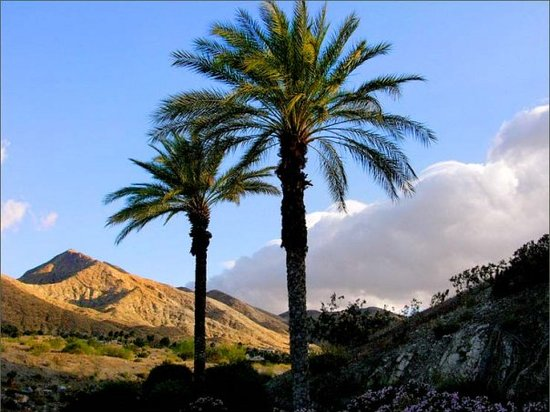 Palm Desert Tourism and Travel: Best of Palm Desert, CA  TripAdvisor